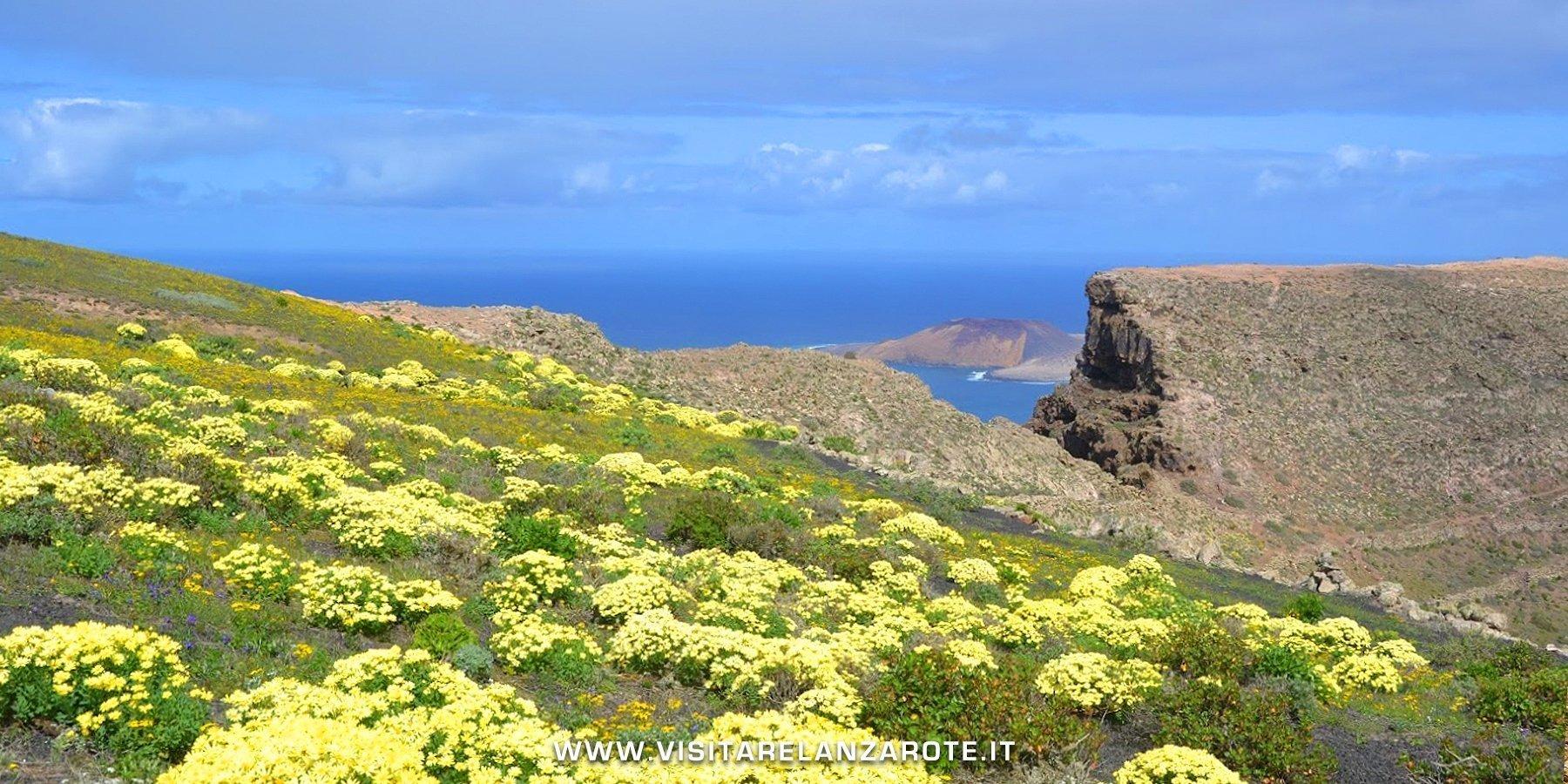 los helechos Lanzarote