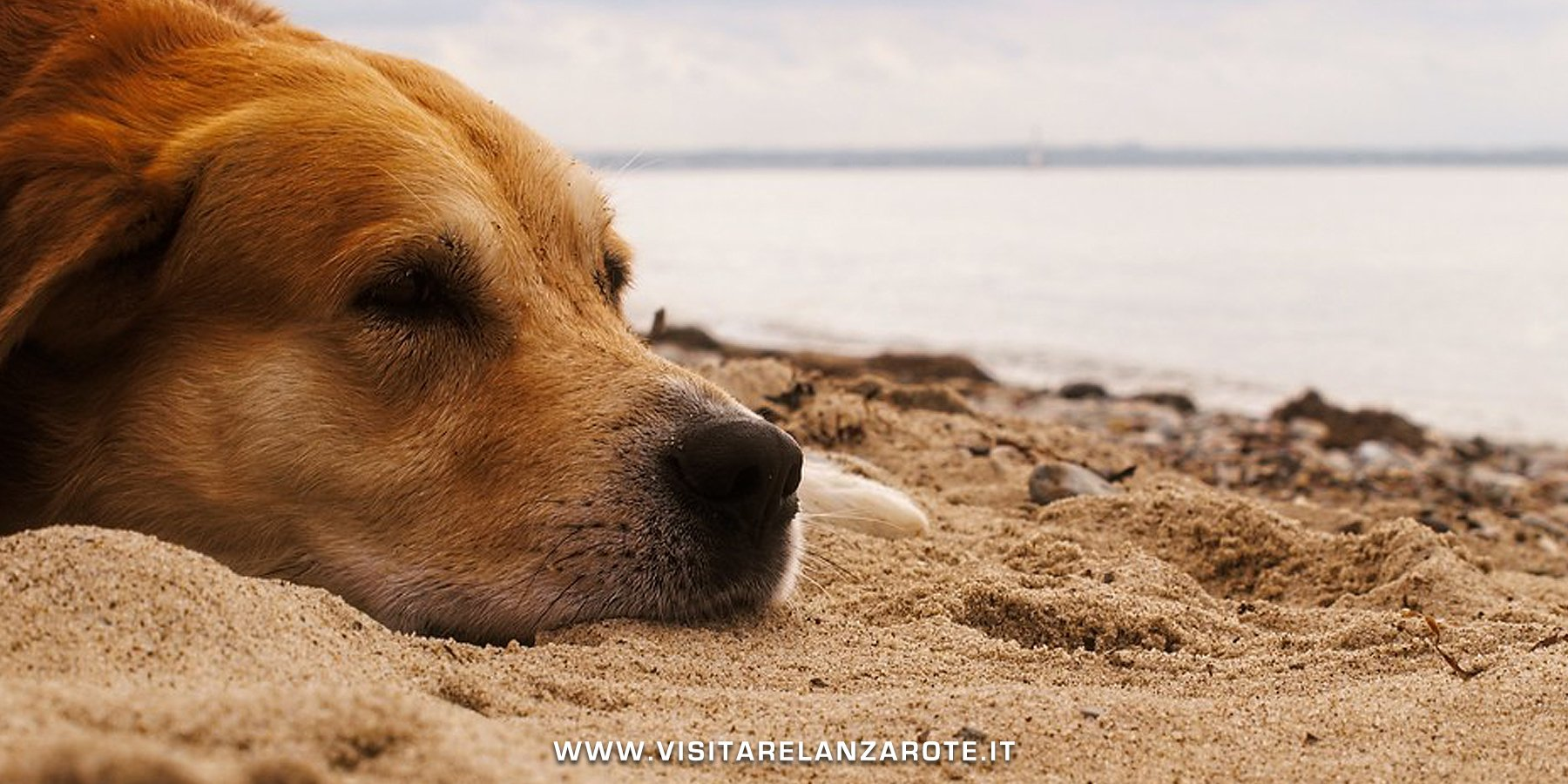 Spiagge Cani Lanzarote