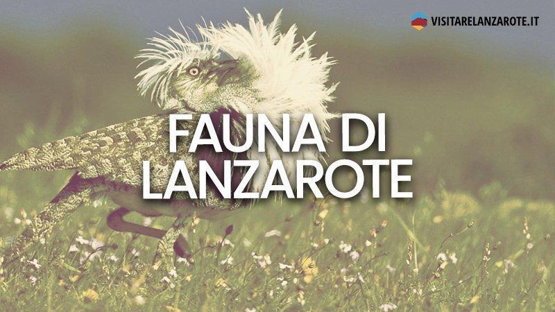 Fauna: gli animali dell'isola di Lanzarote | Visitare Lanzarote
