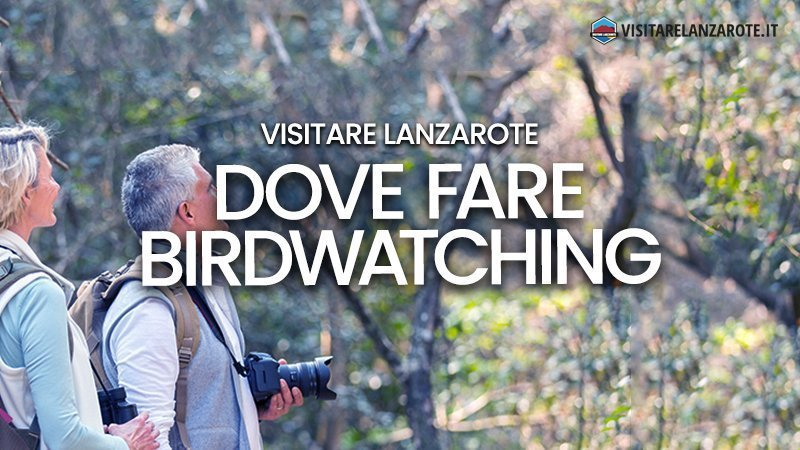 Birdwatching a Lanzarote: le informazioni utili | Visitare Lanzarote